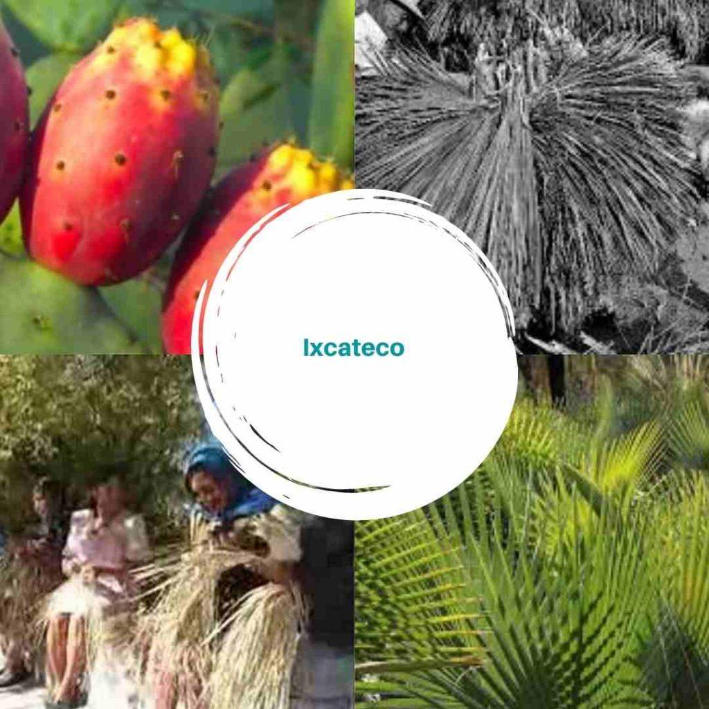Ixcateco